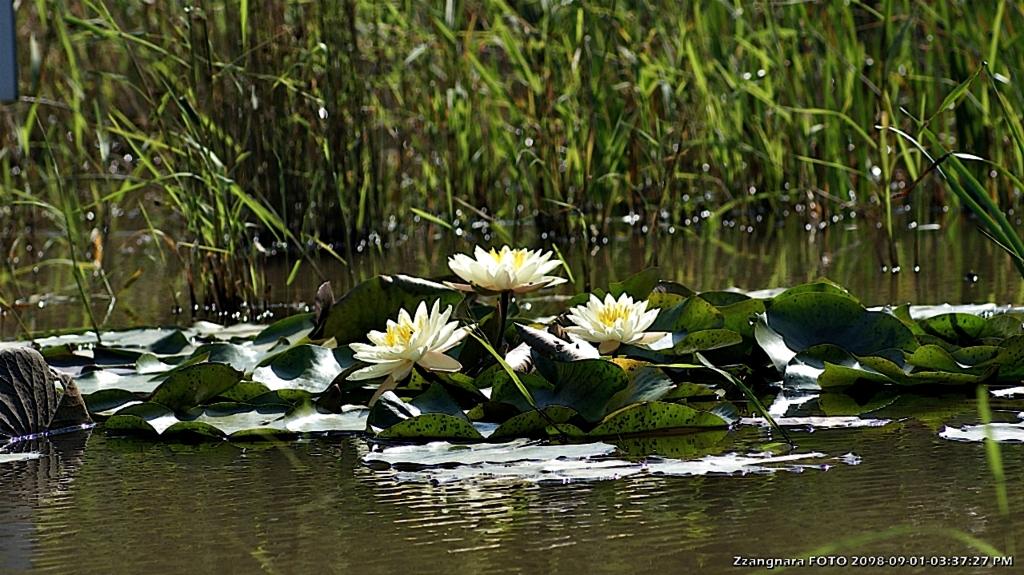 금정산 남문 연못