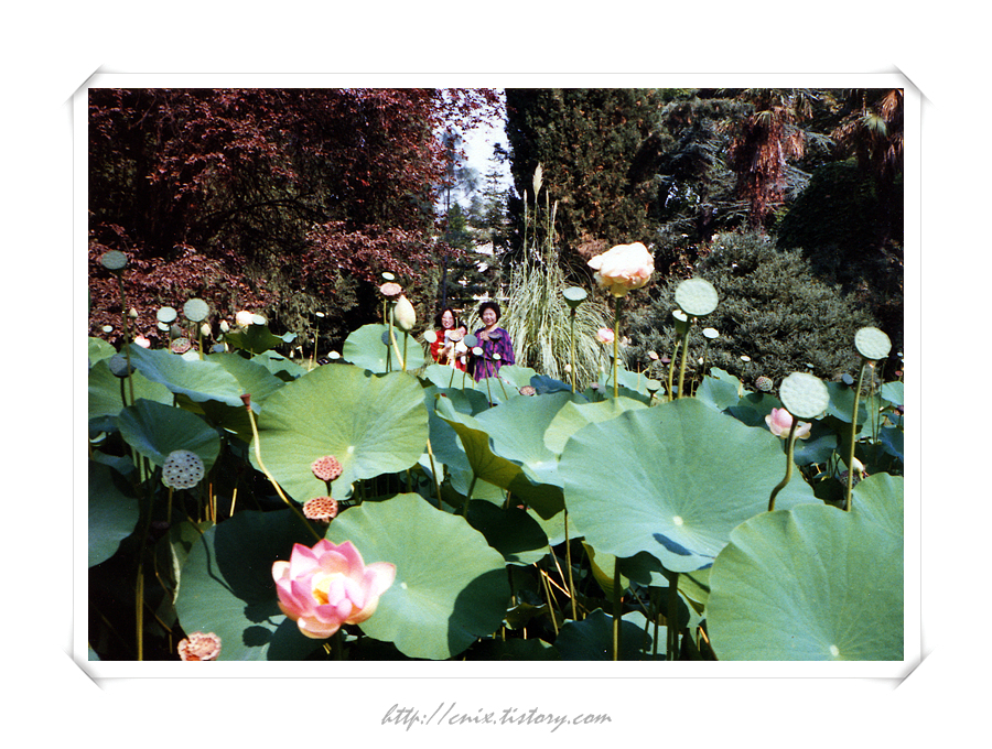 850901_식물원(Jardin des plantes)